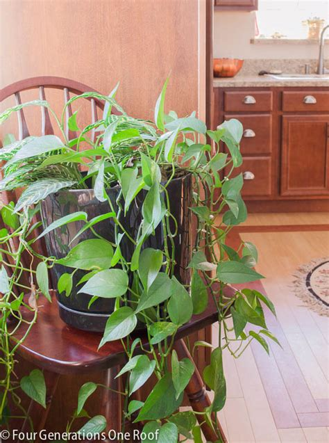 common house plants common house plants my mom her plants four generations one roof