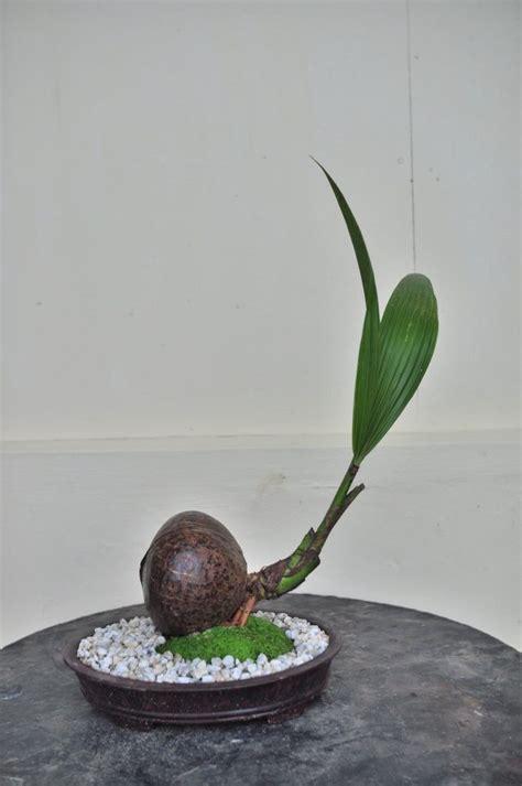 best grow light for bonsai 1004 best bonsai 2 images on pinterest bonsai trees