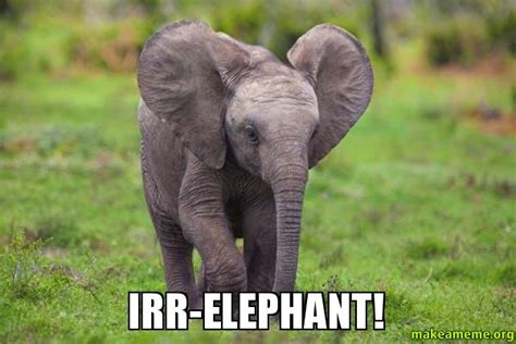 Baby Elephant Meme - elephant meme