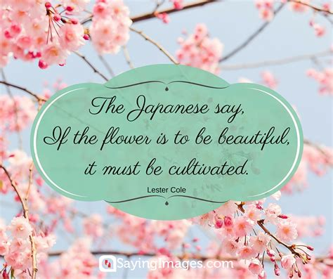 flower garden quotes 42 beautiful flower quotes sayingimages