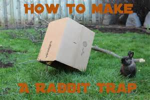 how to catch a rabbit in your backyard how to make a humane rabbit trap