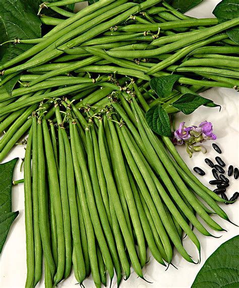 Hack For Home Design buy peas and beans now french bean standard nautica