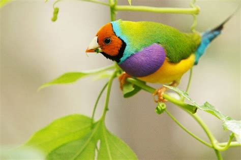 colorful birds amazing world beautiful colorful birds nature
