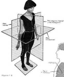 introduction 224 l anatomie et 224 la physiologie