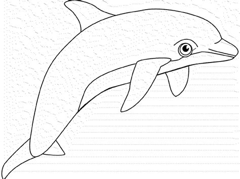 coloring pages of dolphins and whales coloring pages whales dolphins bestappsforkids com