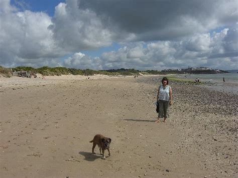 beaches that allow dogs flower beds picture of tenby pembrokeshire tripadvisor