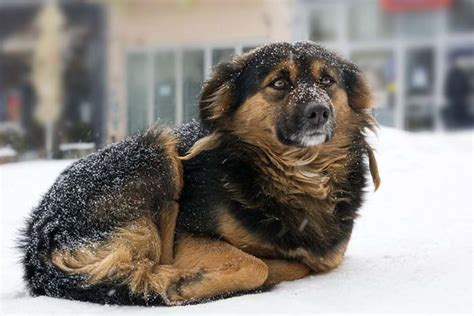 what temperature is cold for dogs when is it cold for dogs in winter and what should you do