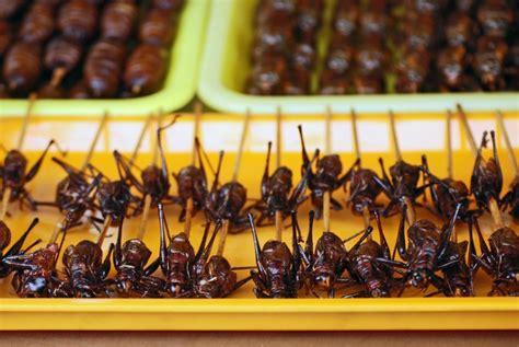 Cacing Jurnal serangga sumber protein yang lebih bergizi republika