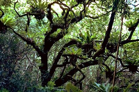 define tree epiphytes are producers and small plants that are non
