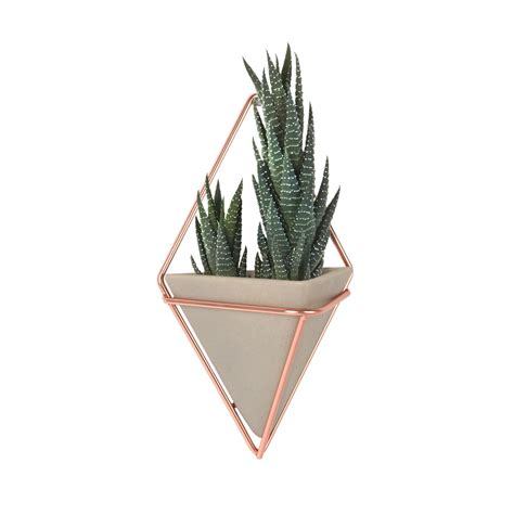 Copper Wall Planter by Buy Umbra Trigg Small Copper Wall Planters Set Of 2 Amara