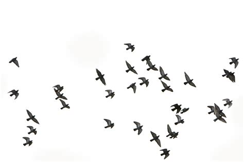 birds flying google search birds butterflies