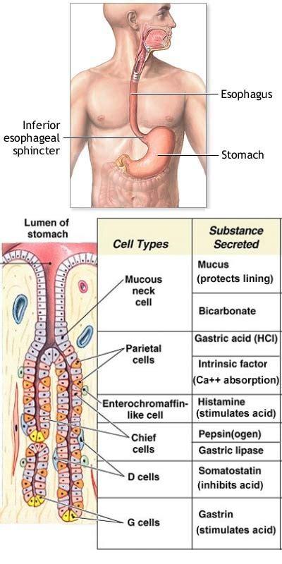 bruciore interno ano stomaco studio specialistico di gastroenterologia dott