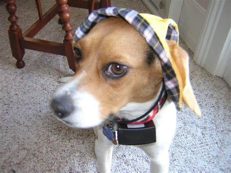 puppies wearing clothes dogs wearing clothes s daycare
