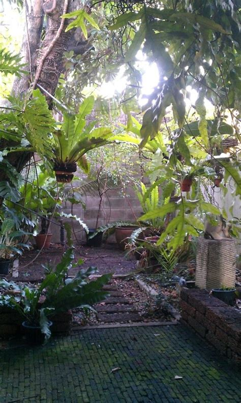 25 best ideas about small tropical gardens on pinterest