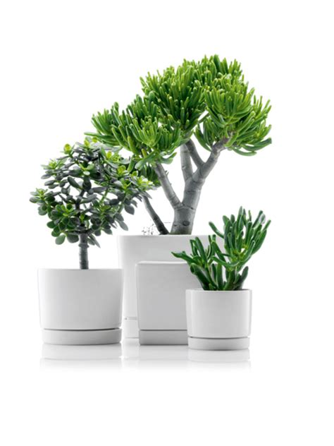 small house plants small house plants on vaporbullfl com