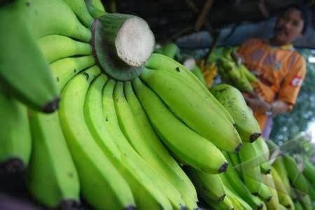 1 Sisir Pisang Ambon jenis jenis pisang di indonesia