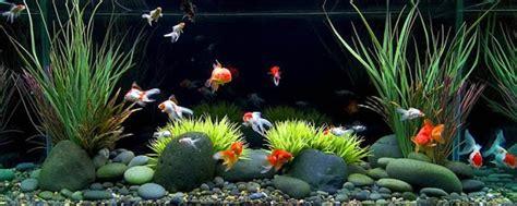 Harga Benih Ikan Nila 2016 cara pembenihan ikan gurame cara budidaya ikan