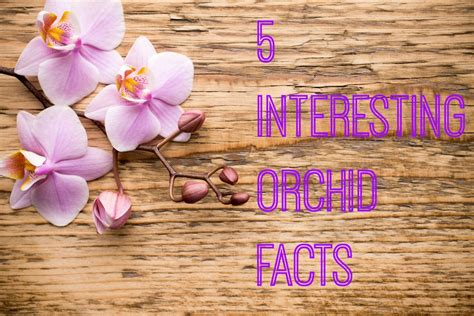orchids facts 5 interesting orchid facts ambius