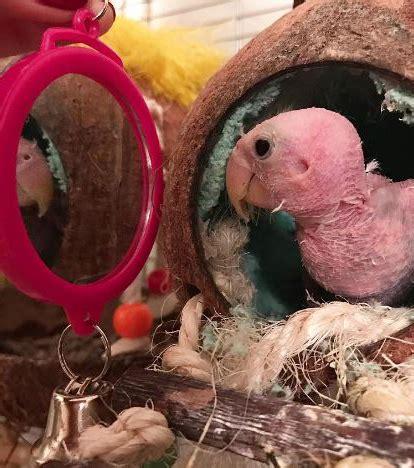 Miroir Qui Est Le Plus Beau by Photo Miroir Mon Beau Miroir Qui Est Le Plus Beau