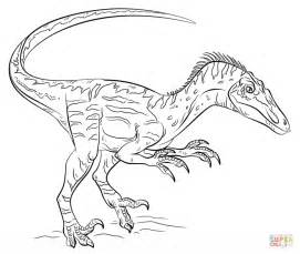 velociraptor coloring page velociraptor coloring page free printable coloring pages