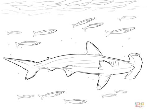 coloring page of a hammerhead shark hammerhead shark with pilot fishes coloring page free