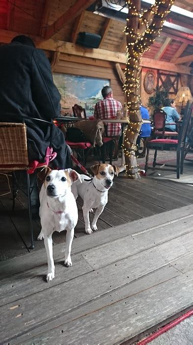 the dog house reviews quirky to the bone the dog house blues tea rooms howth bar review june edition