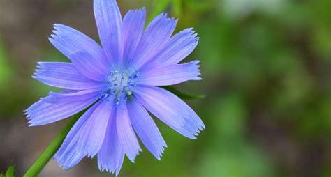 wur bloemen wageningen plant research wur