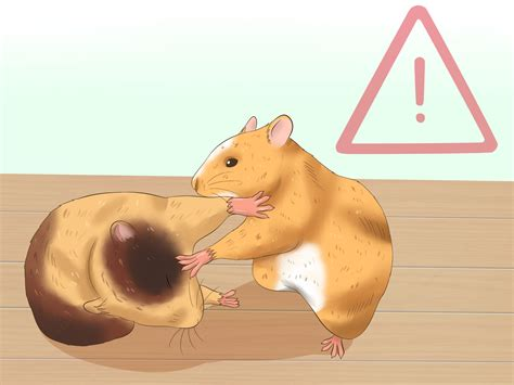 how to if my is how to a hamster 14 steps with pictures wikihow