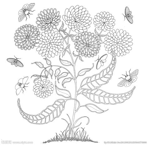 secret garden coloring book out of stock 秘密花园 手绘设计图 绘画书法 文化艺术 设计图库 昵图网nipic