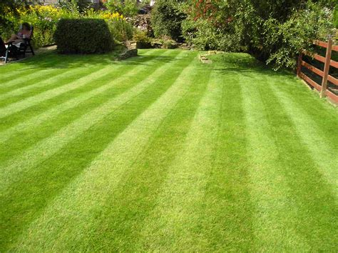 Moss removal lawn aeration amp scarification