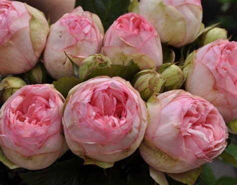 Fall Vase Ideas Charming Piano Rose Romantic Rose Pink Rose Palatine Roses