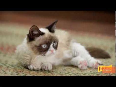 Amigurumi Boneka Rajut Kucing Tabby Cat china s snoopybabe becomes sensation doovi