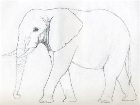 Sketches To Trace by How To Draw An Elephant