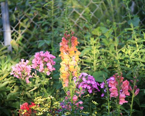 design a garden for flowers all summer great plant list