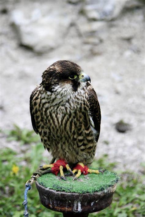 wwwwild bird photocom3gp free bird stock photo freeimages