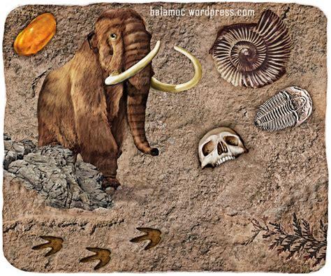 imagenes de fosiles imagenes de fosiles el blog del profe de biolo