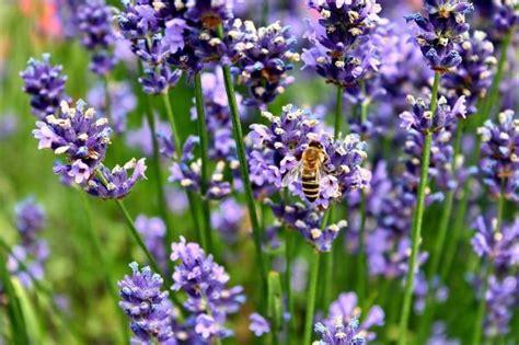 eliminare formiche giardino come eliminare le formiche dal giardino 8 passi