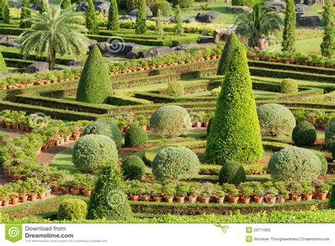 garten zierpflanze ornamental garden royalty free stock photo image 26771955