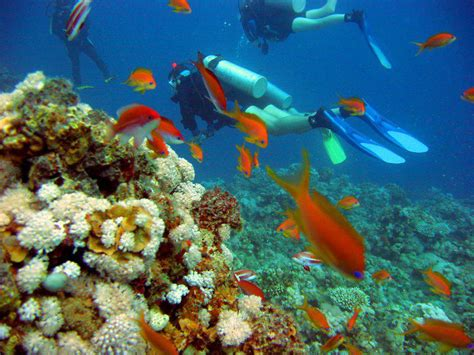dive holidays marsa alam scuba diving holidays from sportif dive travel