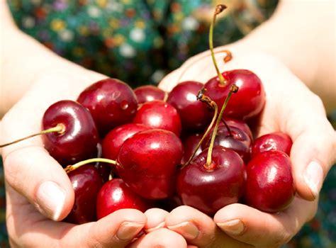 diez ardillas la cereza amigas de la l 237 nea diur 233 ticas antioxidantes diez razones para incluir las cerezas en la dieta