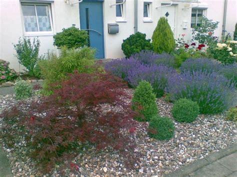 pflegeleichte pflanzen für den vorgarten bepflanzte kiesfl 228 che nach zwei jahren