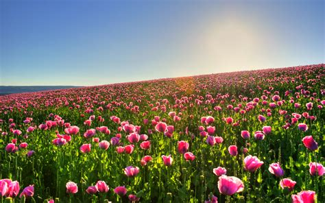 sunny spring meadow wallpapers and images wallpapers