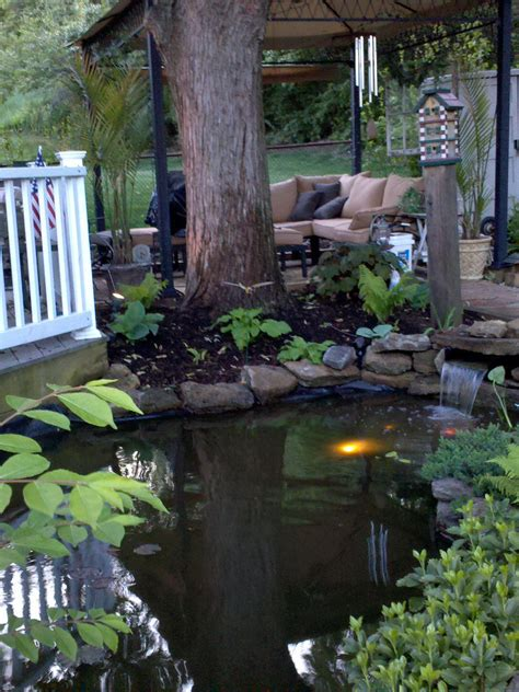 c in my backyard pond in my backyard bassin de jardin pinterest backyard gogo papa