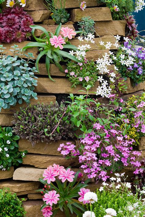 Information About Rock Garden 20 Facts To About Flowers And Plants For Rock Gardens Interior Exterior Ideas