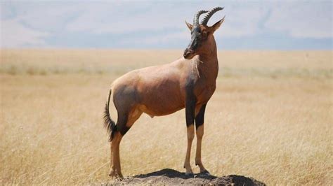 igbo names for animals west africa animal animals list a z animals name a to z