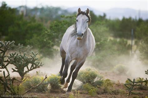 mustang temperament related keywords suggestions for mustang breed