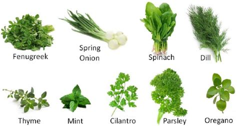 different type of leafy vegetable with name green vegetables in lessons