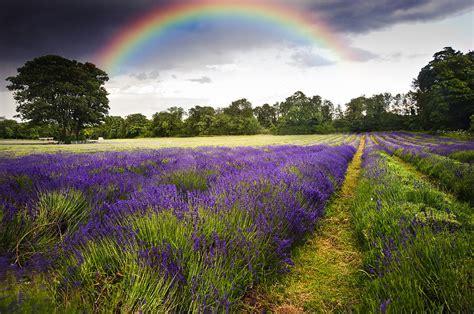 Vibrant Landscape Pictures Clouds Vibrant Lavender Field Landscape