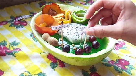 como hacer una celula con dulces maqueta de la c 233 lula vegetal youtube