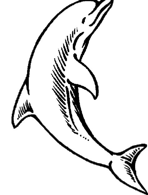 baby sea animals coloring pages free baby dolphin coloring pages
